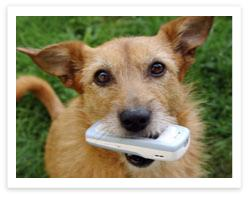 Dog holding a cell phone in it's mouth