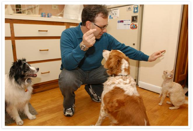 Steve in the kitchen with 2 dogs and a cat